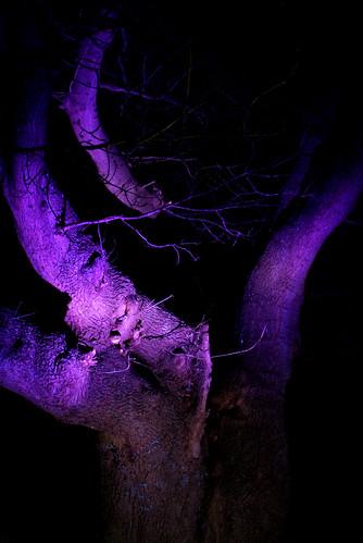 Tree, Fort Brockhurst, Violet Gel On Flash