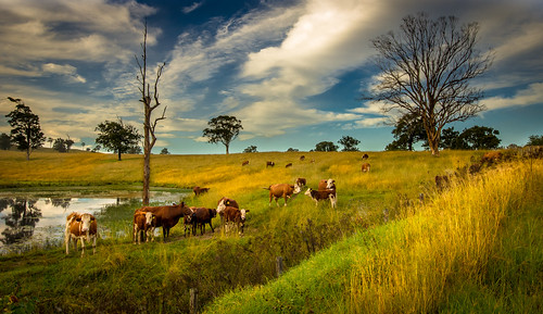 landscape australia nsw outback dungog