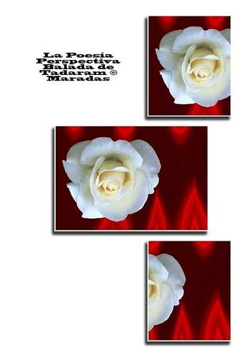 La Poesía Perspectiva Balada de Tadaram © Maradas Authored by Tadaram Maradas by Tadaram Alasadro Maradas