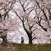 20130331-IMG_9095-1 (Explored Apr 2, 2013 #13) by nansya