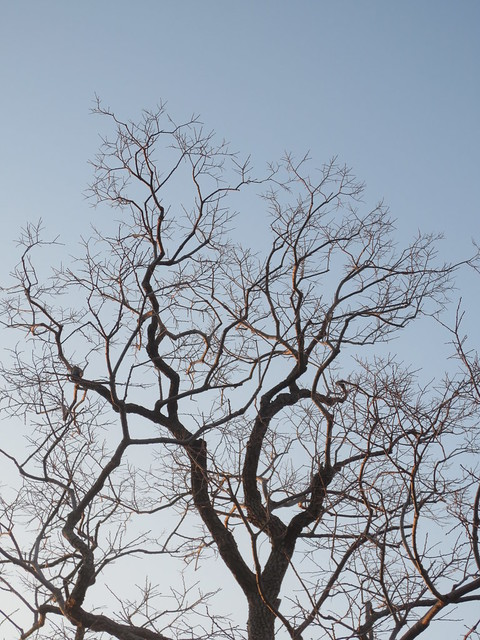 Fractal Branches