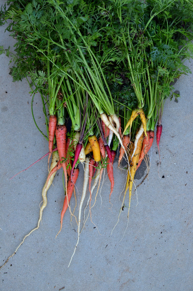 our carrots