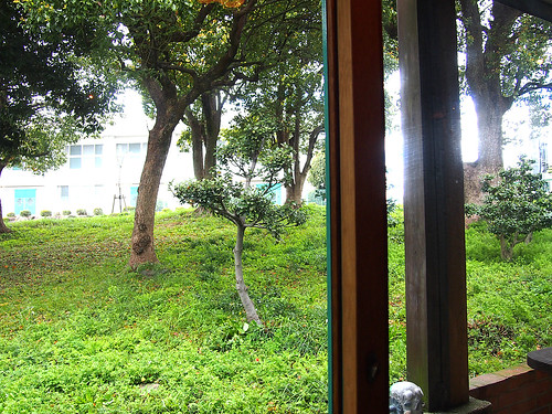 窓から見える緑に癒やされる