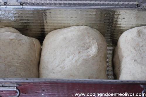 Pan de molde integral www.cocinandoentreolivos (21)