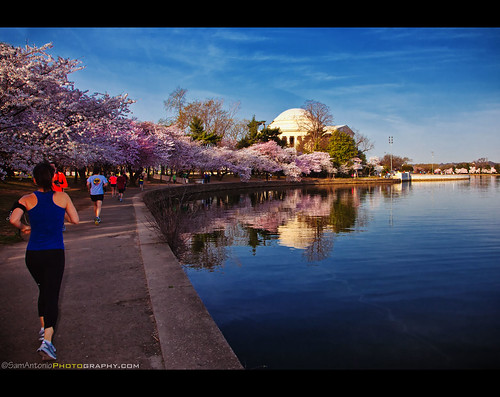 Let's Run into Spring with the Cherry Blossoms! by Sam Antonio Photography