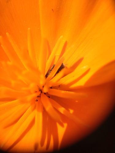California spring 2013