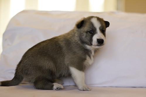 Ike-Kilbe-Pup1-Male(Day 22)-2