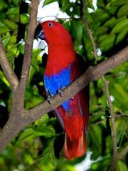 Amazing Birds of Papua New Guinea