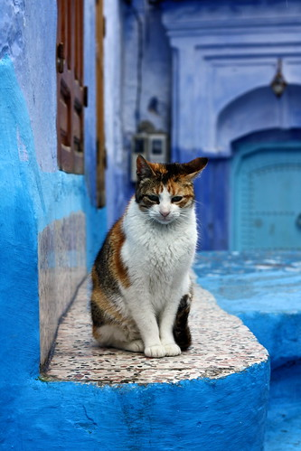 Cat, Chefchaouen, Morocco