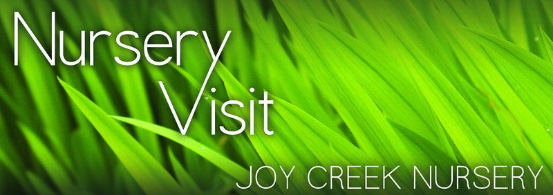 Joy Creek Spring 2013