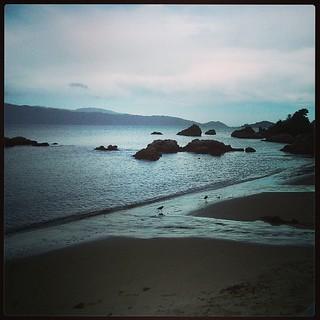 Image de Scorching Bay Beach près de Wellington. square squareformat iphoneography instagramapp uploaded:by=instagram foursquare:venue=4b058779f964a5207c9422e3