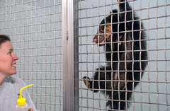 baby bear clinging to cage with keeper looking on