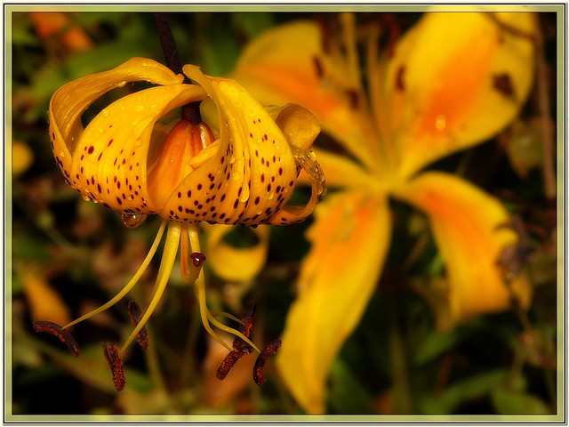 garden (6)