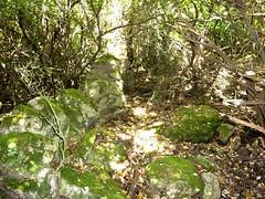 Visite de Sapara Altagna : chemin avec murets