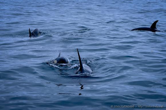 20130524-DSC_9157-orca