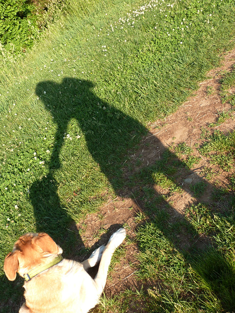 eliz_henry_shadows
