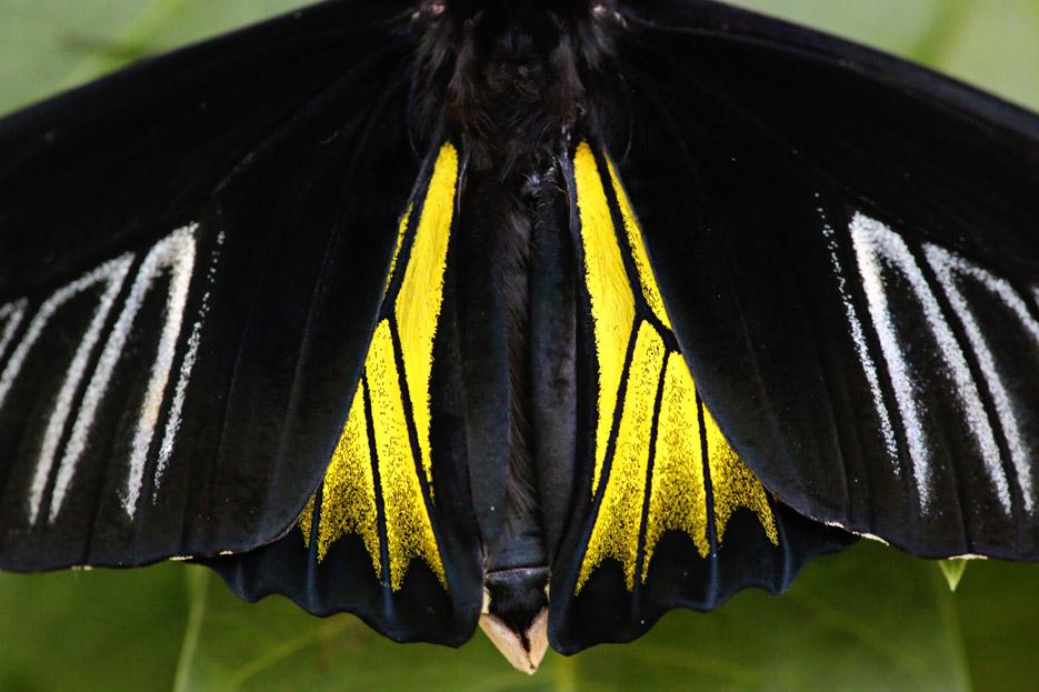 091014_01_butterfly13