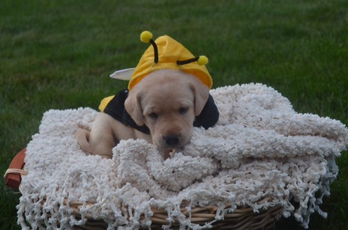 Brie/ Dex pup