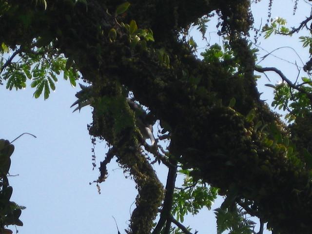 Taiping Lake garden hornbill l IMG_5930