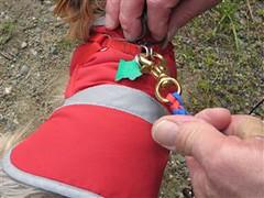 Tucker Ridgerunner paracord leash (4)