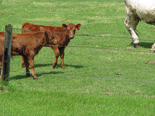 Spring Calving Has Started