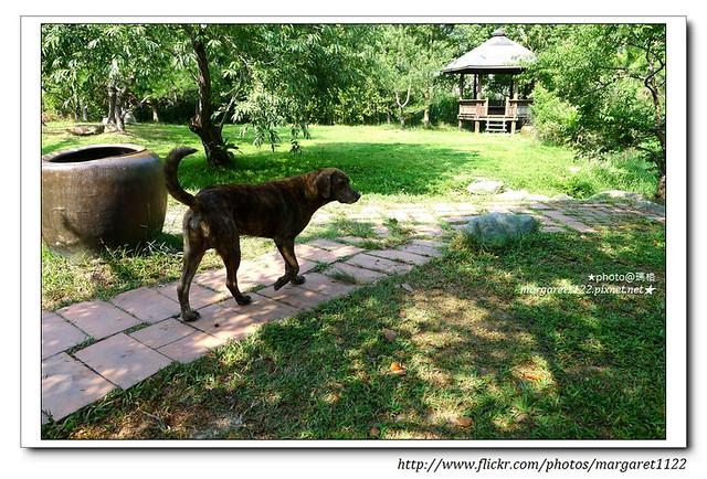 【南投遊記】水里。上安村的狗狗