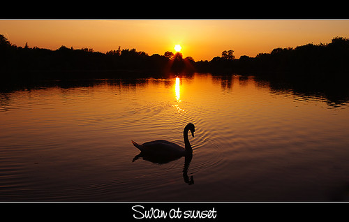 sunset lake reflection water silhouette swan explore wiltshire somerford