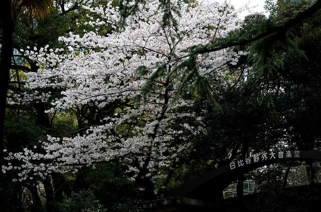 tokyokasumigaseki-16