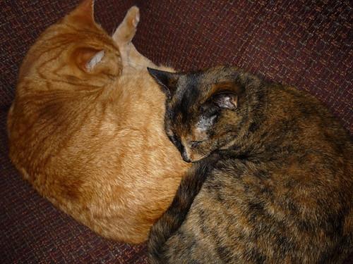 Naia and Coco 2010