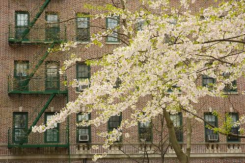 Brooklyn, NY by cisc1970