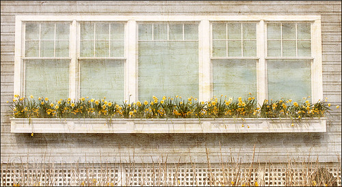 Window Box Textured