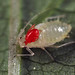 aphid with mite by myriorama