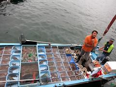 hksaikung005fishboat