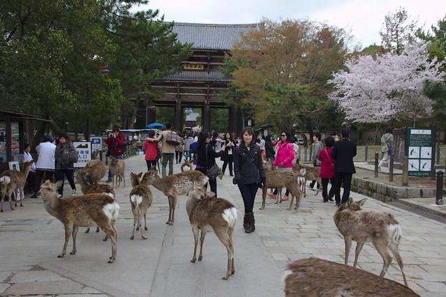 1055 - Nara