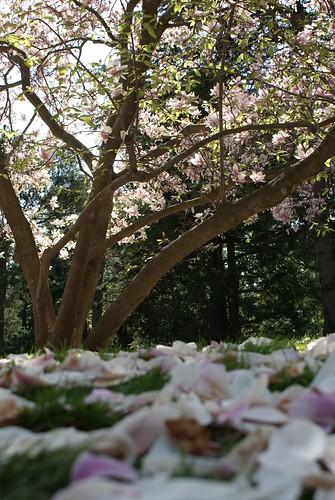 Schönbrunn Schloß Gartens