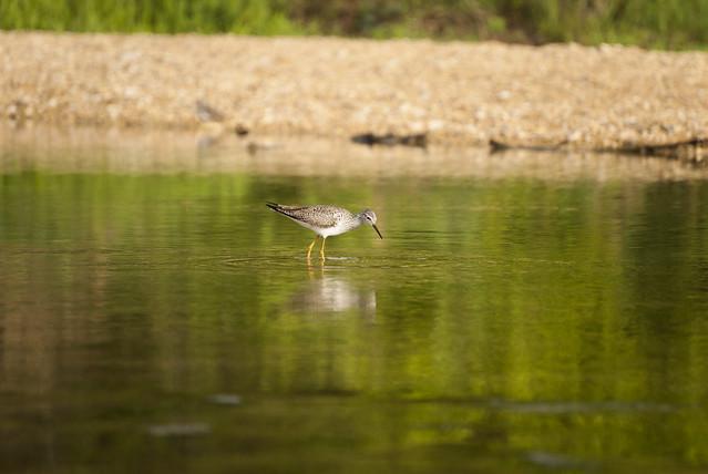 Bird - McKinney Falls, State Park