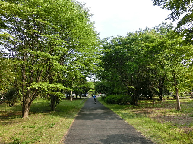 Showa-kinen Park(Tachikawa,Tokyo,Japan)
