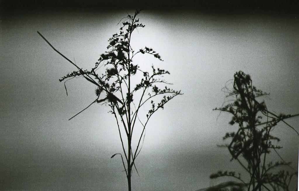 Makro Pflanze