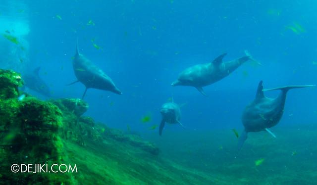 Marine Life Park Singapore - S.E.A. Aquarium - Dolphins 5