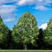 Trois-Arbres - three trees - Trois frères