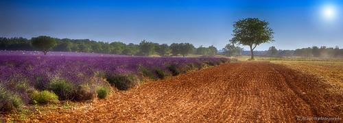 Champs de Provence......