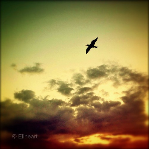 95:365 Freedom by elineart
