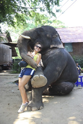 suave elephant… suave...