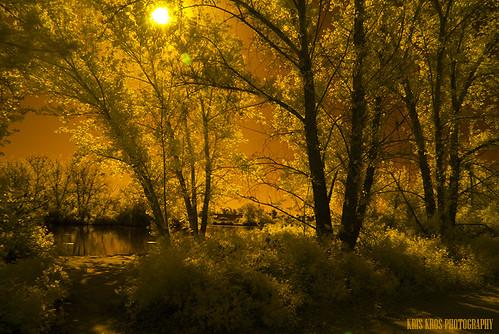 california ca camera morning bridge sun lake tree photoshop ir photography gold golden nikon raw wildlife reserve tokina filter processing infrared kris sunburst d200 van oaks sherman sepulveda kkg hoya woodley nuys r72 cs6 kros kriskros kkgallery irsepvda