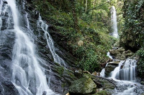 白藤の滝と観音の滝 2012.4.12