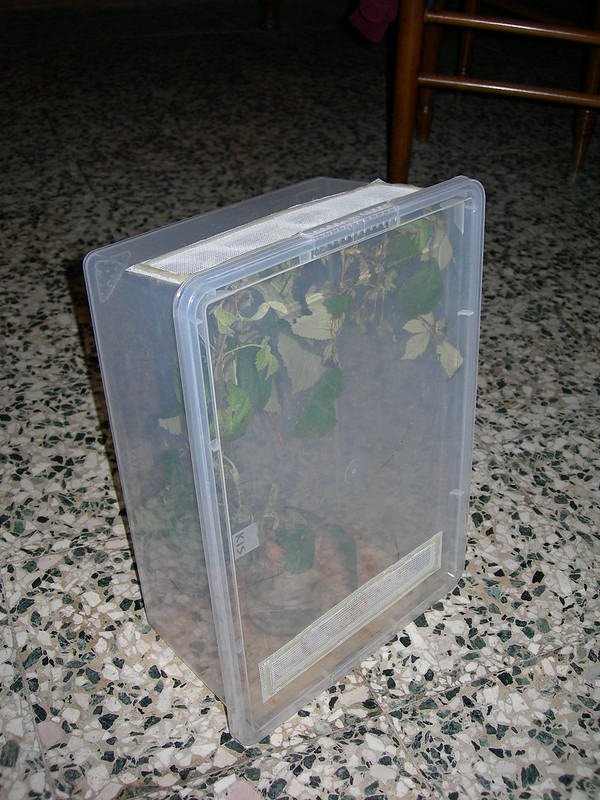 Portable phasmid cage