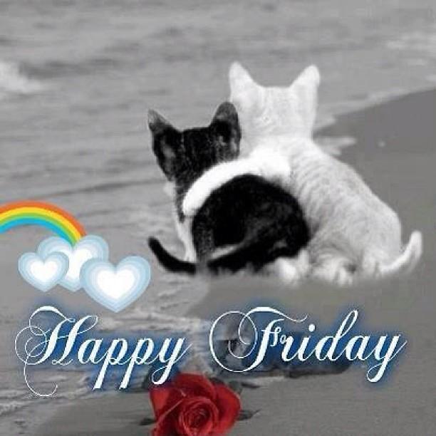 #Happy Friday!! #kittens :)   Flickr - Photo Sharing!