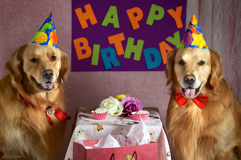 BZ Dogs: Happy Birthday - photo#31
