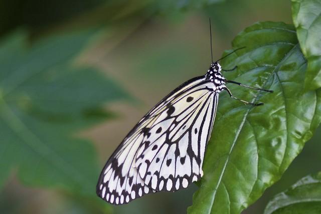 21 mooie kleurrijke vlinder - photo #16