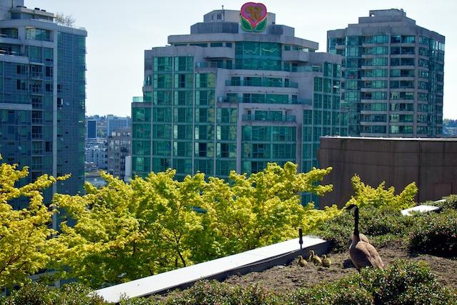 VPL's Green Roof